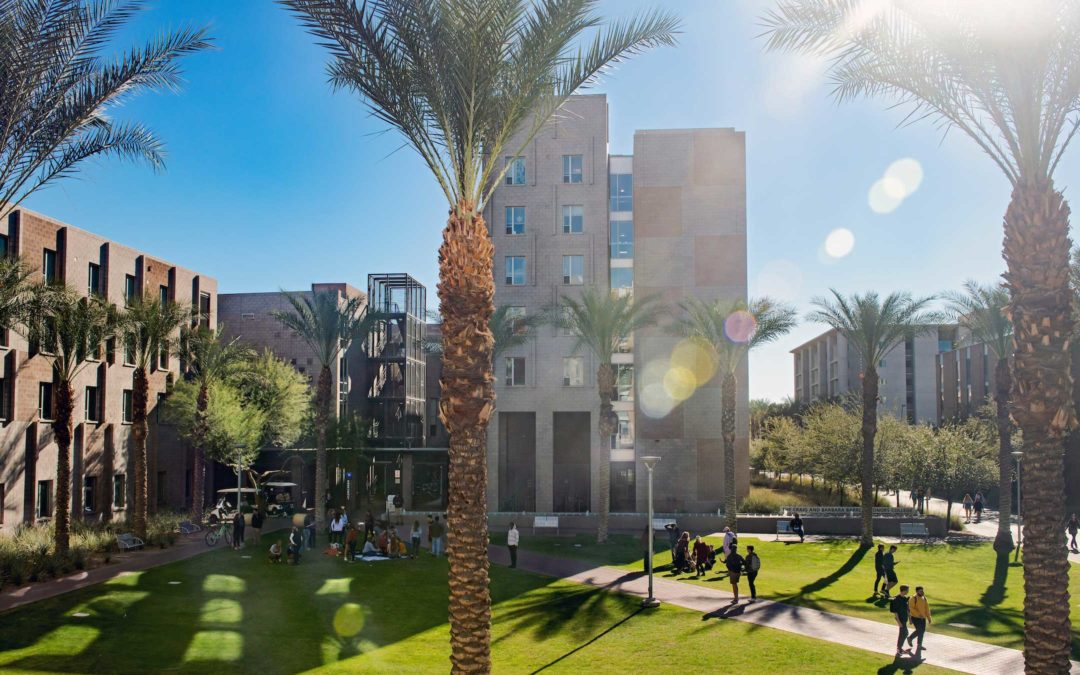 Palm trees in the sunlight on campus
